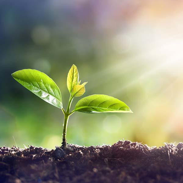 Wachstum - unser Lieblingsthema